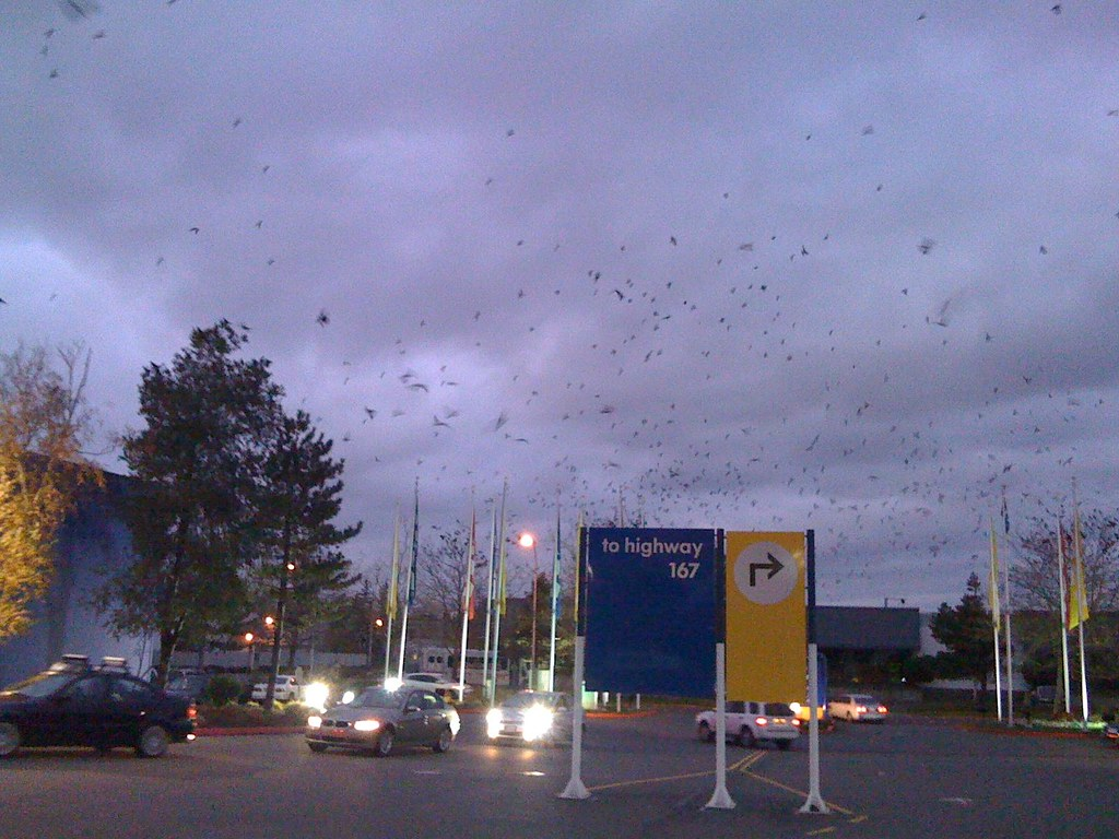The crows over ikea renton seattle washington usa for Ikea bellevue washington