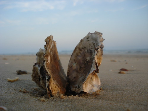 Oyster Shell | by http://klarititemplateshop.com/