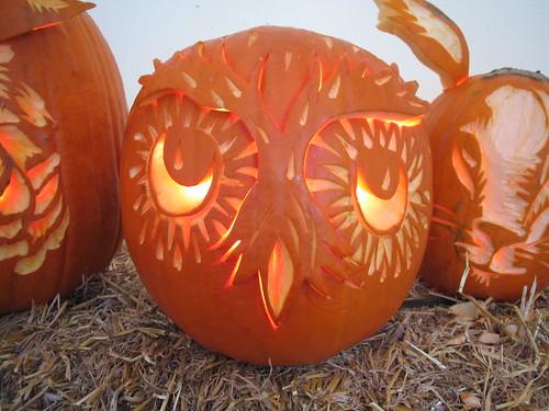 Owl pumpkin n d sullivan flickr