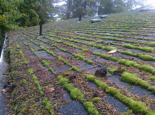 Roof Moss Beaverton Oregon Gleaming The View 503 430