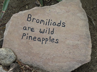 bromiliads are wild pineapples | by MeganEHansen