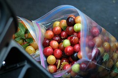 plums in car | by David Lebovitz