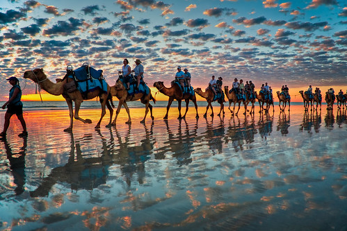 Camels at Sunset,  Cable Beach W.A | by Symoto
