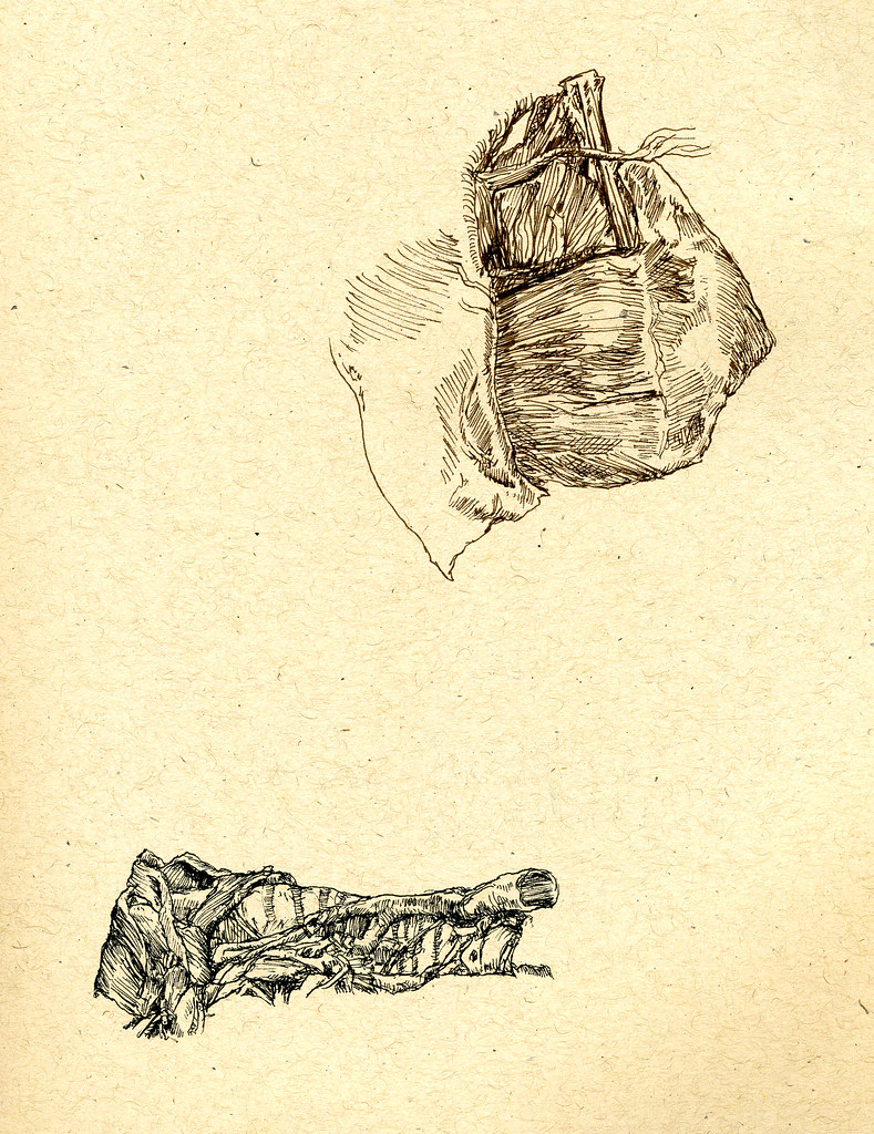 Anatomy of shoulder and throat | Ali Cat. Leeds | Flickr