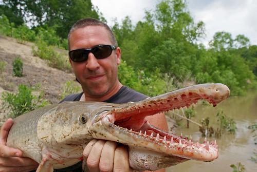 Alligator gar alligator gar trinity river texas dave for Gar fish texas
