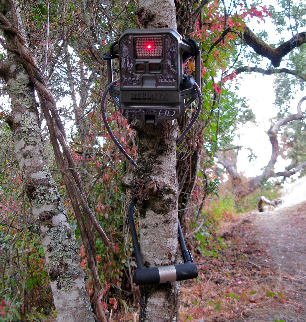 Camera Trap - Originally designed for hunters (to remove mor… - Flickr