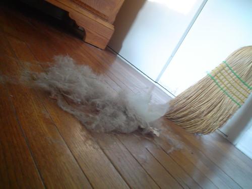 Dust Kittens