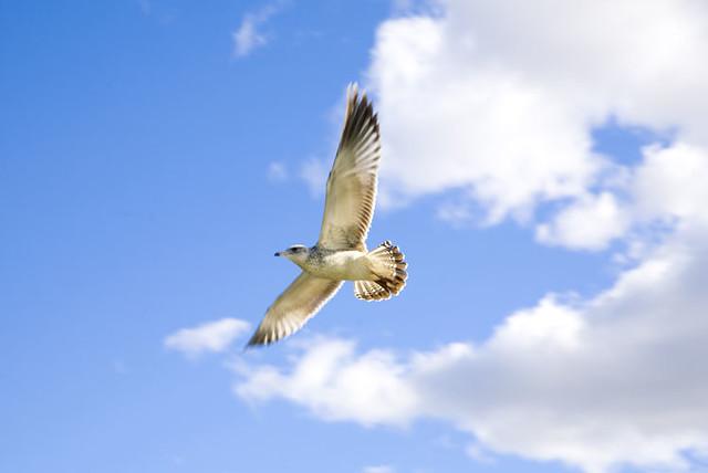 Oiseau qui vole mathieu doyon flickr for Un petit oiseau