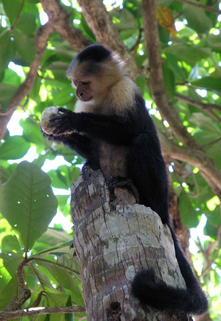 Capuchin Coffee