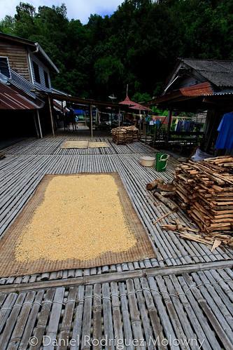 Suelo de bamb las longhouses son construcciones - Suelos de bambu ...
