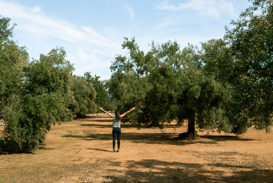 0.-historical-landscape-Millenary-Olive-Trees-Territorio-Sénia