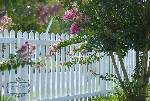 White Picket Fence | by Jessi Leigh
