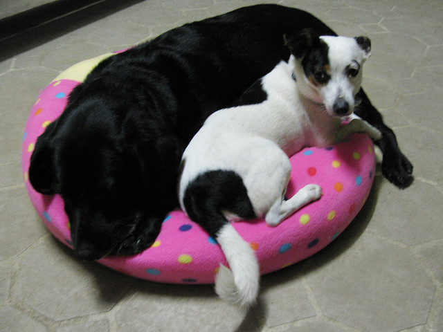 Fleece Dog Bed Pads With Rings