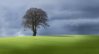 A Patch of Sunlight on a Dark Day | by wentloog