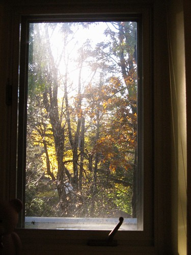 Day 308: Through the Window | by susanvg
