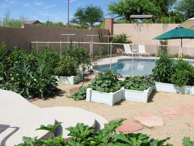 Attractive ... Summer Veggies From A First Time Desert Gardener   Las Vegas Gardening  | By Leslie Amazing Pictures