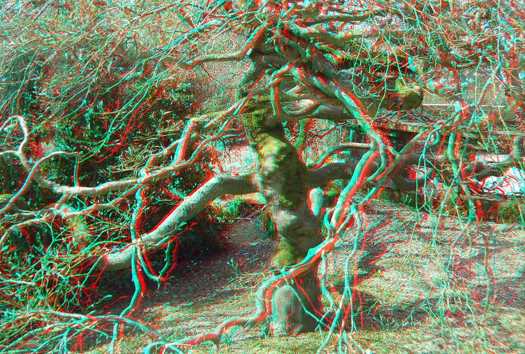 Tree In Anaglyph 3D Red Blue Glasses To View