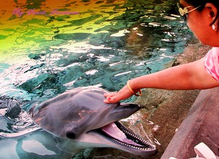 Lovely  touch  and Laughing Dolphin | by Sunciti _ Sundaram's Images + Messages