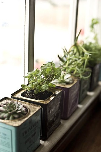 Kitchen window herb garden | by LarkingAbout