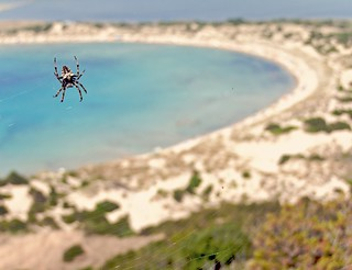 spider with good view | by Winfried Veil