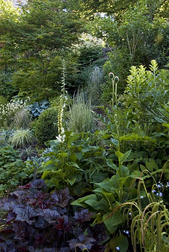 Mixed border in the morning light an impression from our for North facing back garden designs