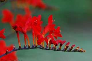 a little red... | by Ben Tebbens; busy busy...