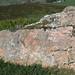 Red porphyritic granite