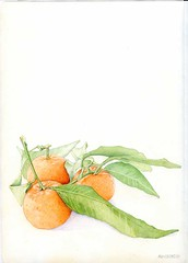 54: Clementines the Christmas Oranges | by Floating Lemons