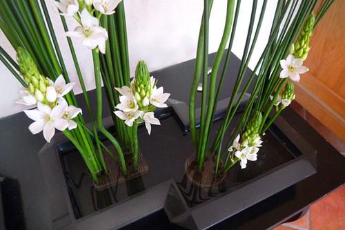 Décoration florale moderne pour un hall d\'entrée | Joncs et … | Flickr