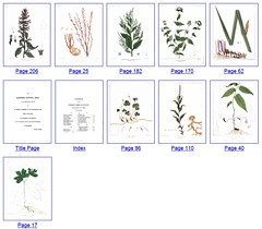 Google Book Search (Full-view) - Color Pictures - Botany | by hardin_md