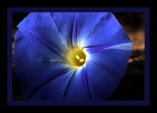 ~~~Good Morning Glory~~~ | by ~~~Gasssman~~~