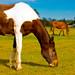 Horses at Kirkham