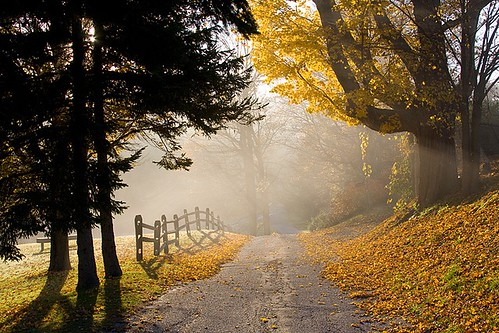 Autumn Road | by Denis Tangney Jr