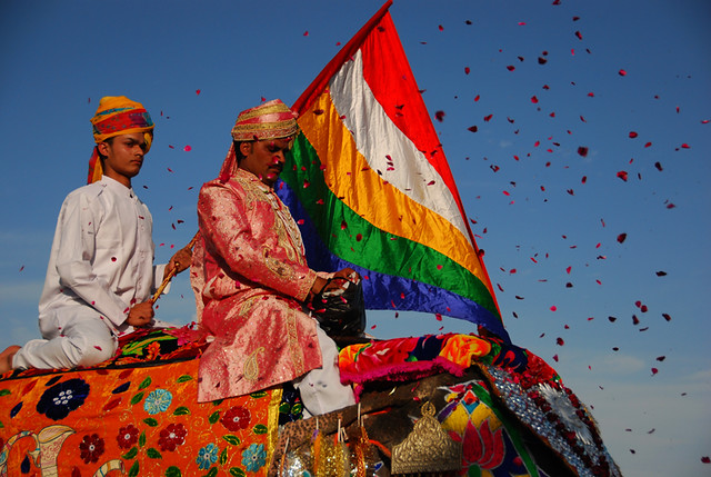 Throwing handfuls of rose petals at the Elephant Festival in Jaipur, India
