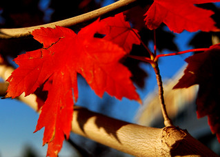 Autumn 2009 (3) | by dktrpepr