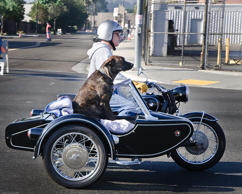 biker and dog 16by20 | by Andrew Kass