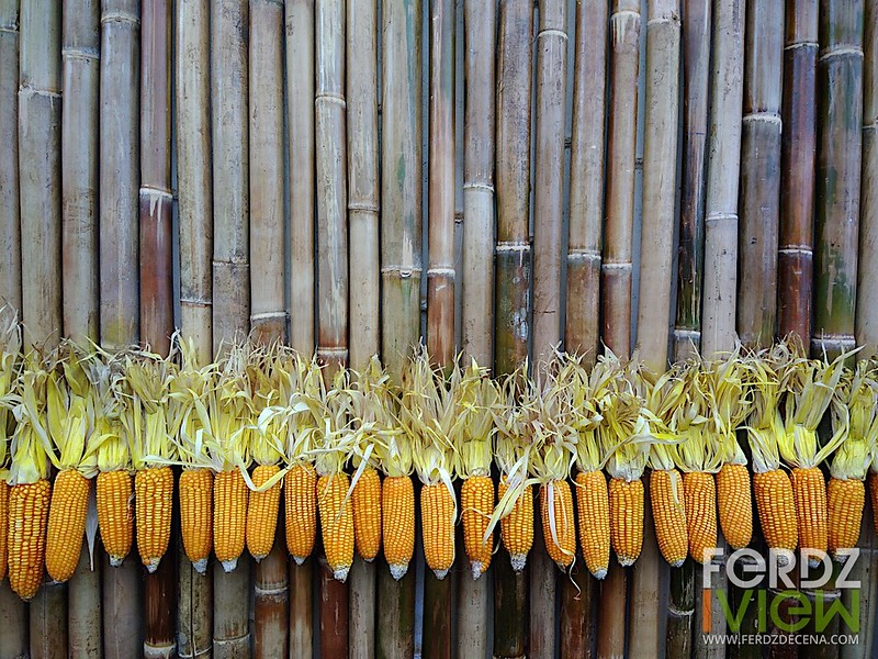 Corn on the wall