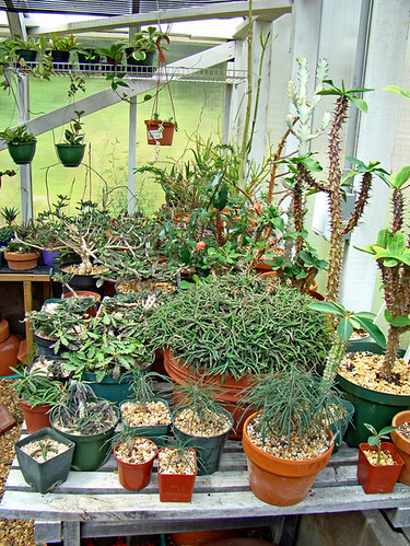 Greenhouse plants 1 | by ceropegia