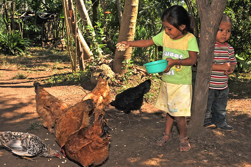 Feeding Chickens in Nicaragua | by Bread for the World