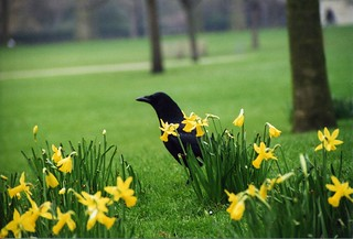 london-bird-yellow-flowers | by domnit