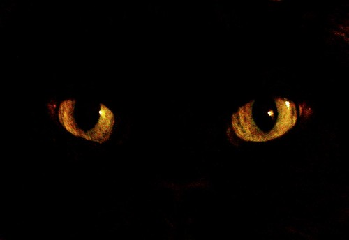 The eyes of an old black cat | by Patrick Feller