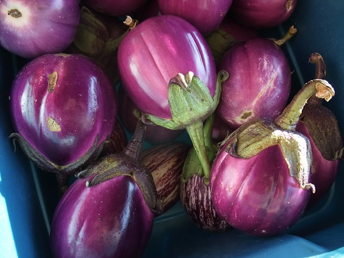 Eggplants | by swampkitty