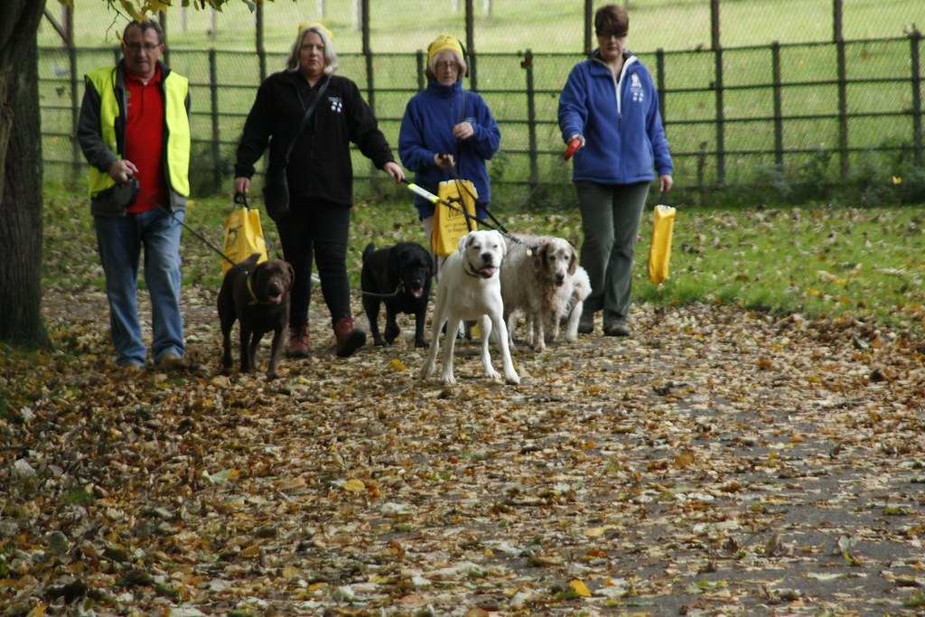 Dog Trust Walk Dogs For Free