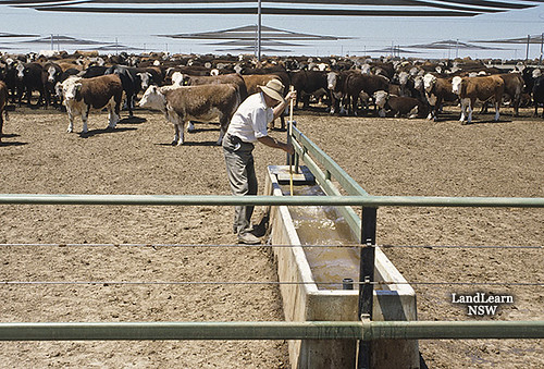 Cattle Feedlot Water Supply Cattle Feedlot Cleaning
