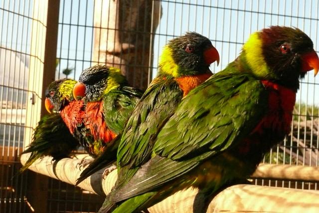 Exotic Birds (77)