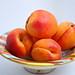 Aprikosen / Apricots