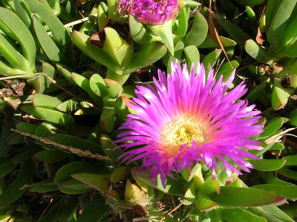 Ornamental Grass Seeds  10 Top Grasses  Flower Seeds