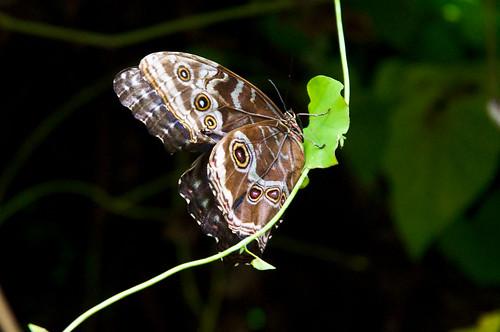 Casa Delle Farfalle di