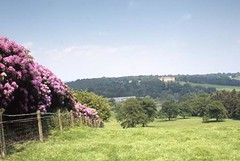 Harewood Estate - Blossom looking towards the House | by Harewood House
