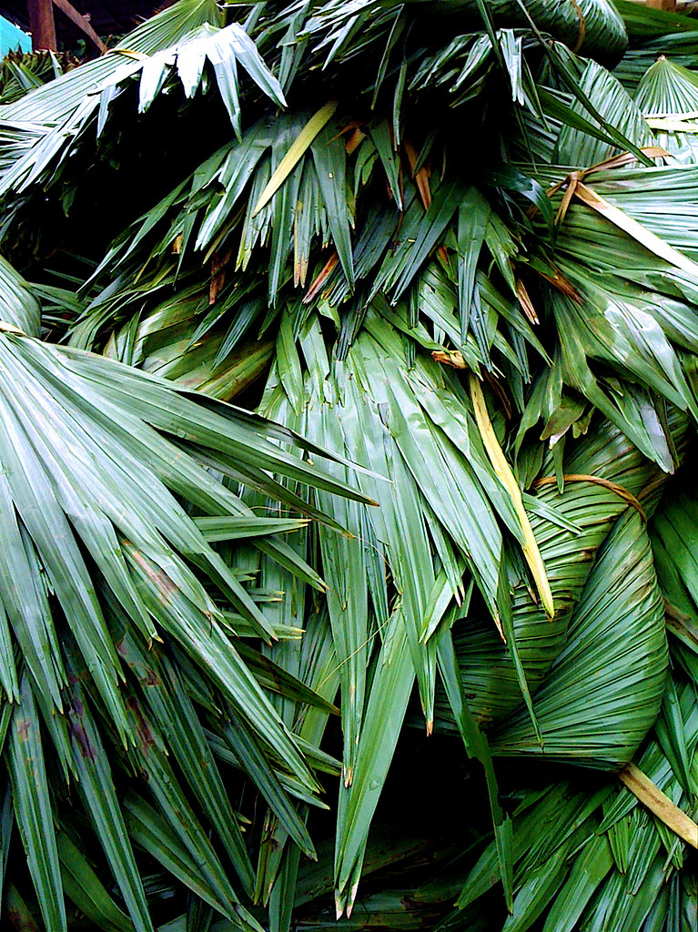 Anahaw Leaves Used In Nipa Hut Roofs Also Called The